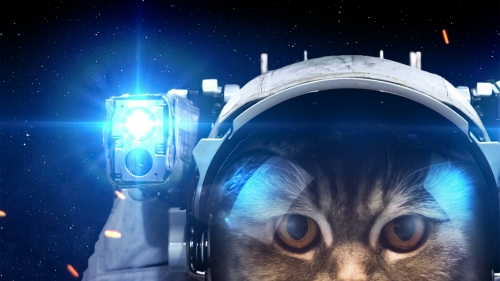 A Cat In The Space Animals QHD Wallpaper