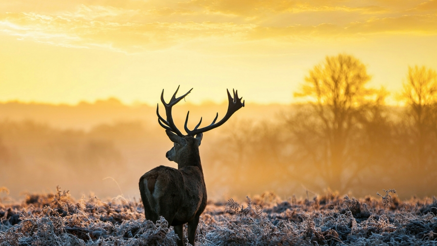 A Deer In The Wild Animals QHD Wallpaper