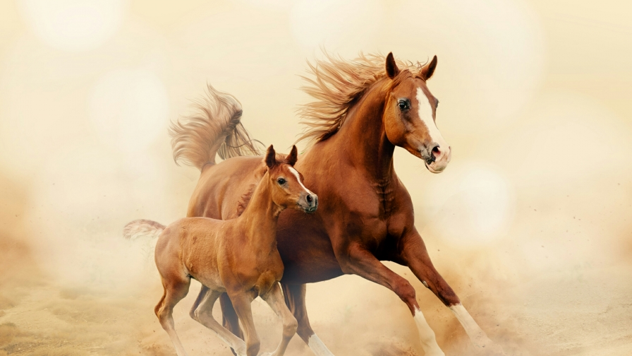 A Mare Running With Her Kid Animals QHD Wallpaper