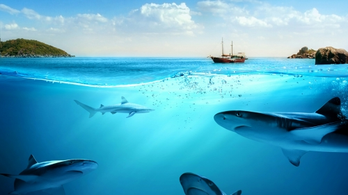 A Pack Of Sharks Under The Blue Ocean Water Nature QHD Wallpaper