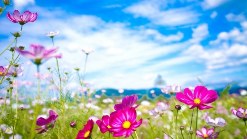 A Perfect Day Flower HD Wallpaper