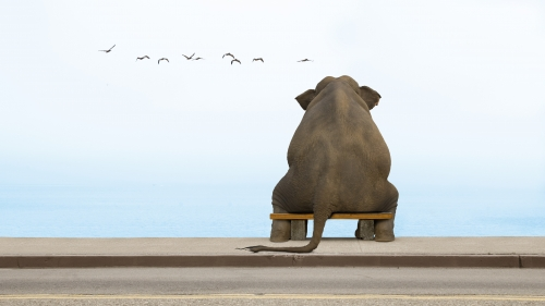 A Sad Elephant   Animal HD Wallpaper