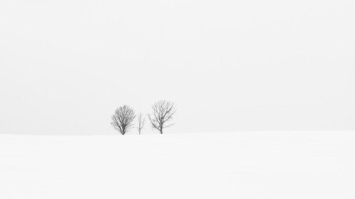 A Small Family of Lonely Trees 4K Minimalist Nature Wallpaper