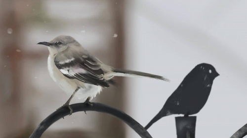 A Sparrow Artistic Work Paintings 2560x1600 QHD Wallpaper 3