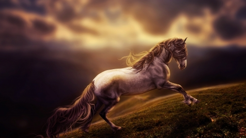 A Wild Horse   Animal HD Wallpaper