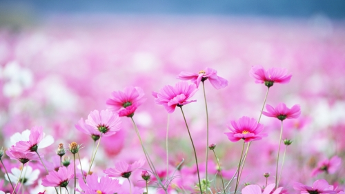 Beautiful Flower HD Wallpaper 18