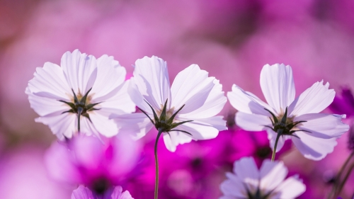 Beautiful Flower HD Wallpaper 8