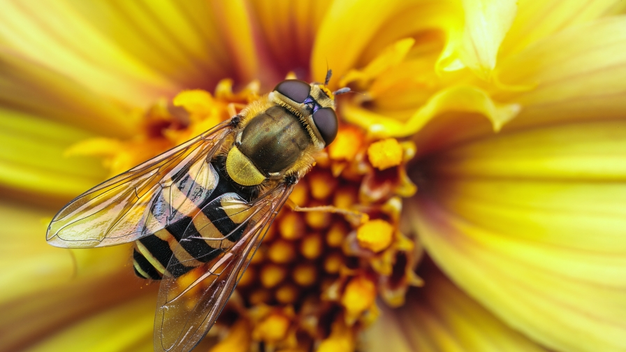 Bee On A Yellow Flower   Photography HD Wallpaper