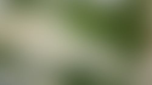 Blurry Background Vactual Exclusive HD Wallpaper No 146