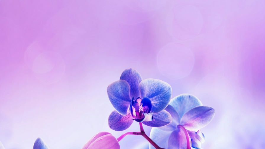 Close Up Of Flower Branches Flowers QHD Wallpaper