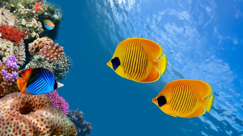 Colorful Fish In The Ocean   Animal HD Wallpaper