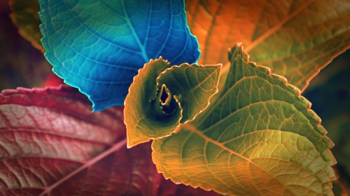 Colors Of Leaves HD Wallpaper