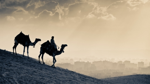 Desert Sunset And A Camel Ride Animal HD Wallpaper