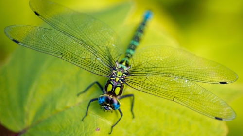 Dragonfly   Photography HD Wallpaper