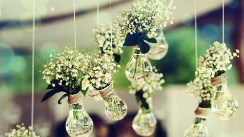 Hanging Light Bulbs Holding Plants Creative QHD Wallpaper