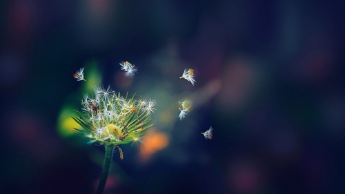 I Am Going To Fly Away Flower HD Wallpaper
