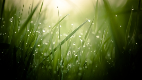 Morning Dew Nature HD Wallpaper