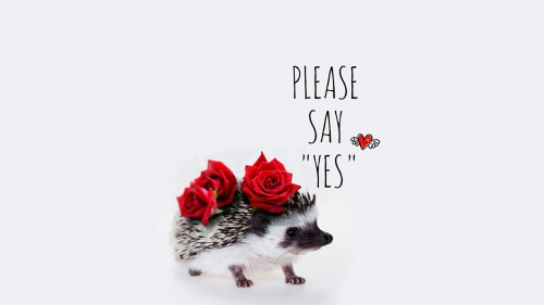 Please Say Yes Valinetines Day Events QHD Wallpaper