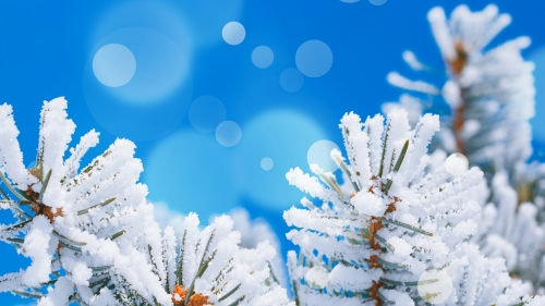 Snow Flakes On Christmas Tree With Blue Background Events QHD Wallpaper
