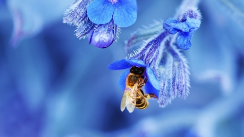 The Flower And The Bee Flower HD Wallpaper