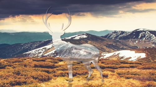 The Missing Deer Creative QHD Wallpaper 3
