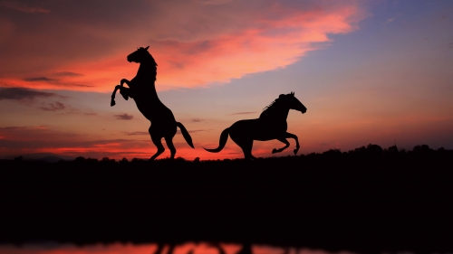 Two Wild Horses   Animal HD Wallpaper